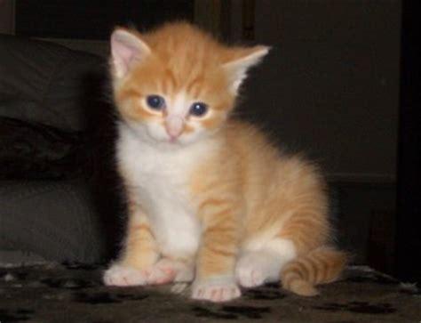 katzen entwurmen ab wann katzenforum netz katzen de ab wann steht die