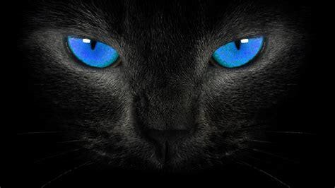 wallpaper cat black black cat eyes wallpaper wallpup com