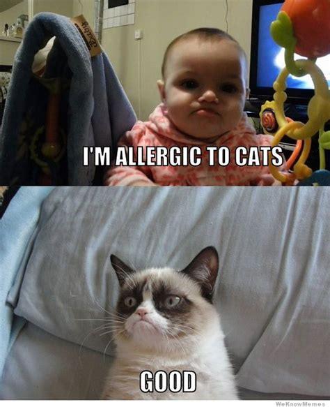 Frowning Cat Meme - 25 best ideas about grumpy baby on pinterest grumpy dog
