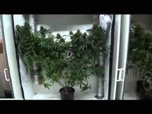 cannabis schrank growing marijuana on a budget