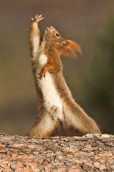 Dramatic Squirrel Meme - dramatic squirrel kingdom of cuteness pinterest