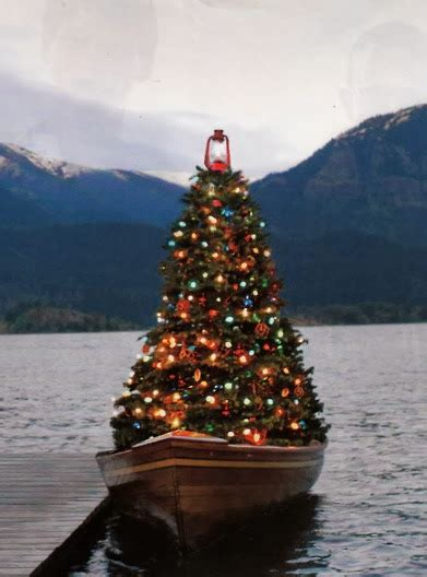 how do i water a christmas tree when away sally by the sea coastal lifestyle goodbye from on the water