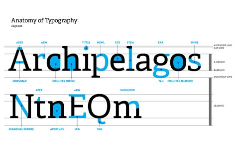 typography stem typography anatomy gallery
