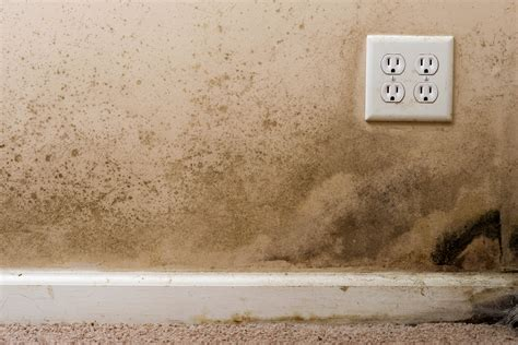 buying a house with mold in basement is your home a trap how mold affects your health