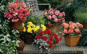 colorful shade plants colorful blooms for shade flower bulb