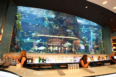 fish tank house vegas happy hour discovery chart house at golden nugget