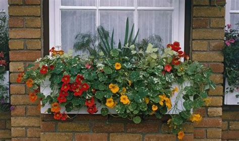 flowers for balcony garden alan titchmarsh s tips on growing plants on balconies
