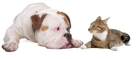 cat and dog in same house how to choose a dog everything you need to know before you adopt