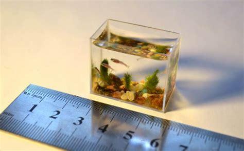 cara membuat filter aquarium dengan mudah cara membuat aquarium sederhana dan mudah untuk ikan hias
