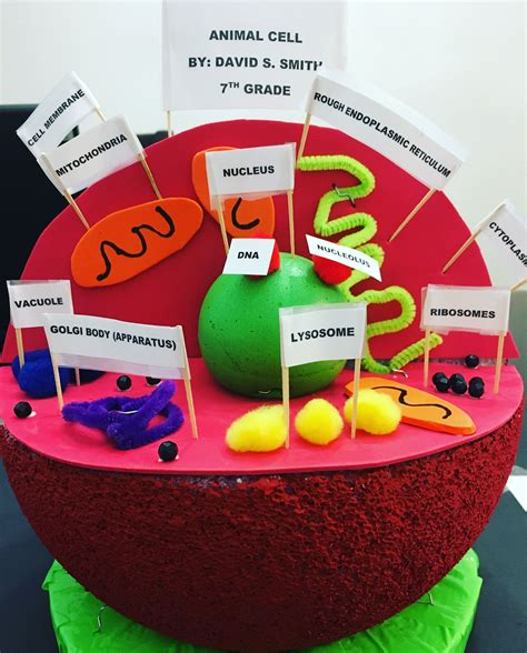3d Model Of A Cell