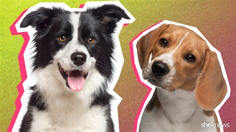 breed matcher 21 breeds to match your lifestyle find your pooch match