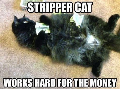 Funny Stripper Memes - stripper cat meme cake money silly yes i have a