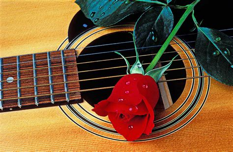 rose theme guitar guitar with single red rose photograph by garry gay