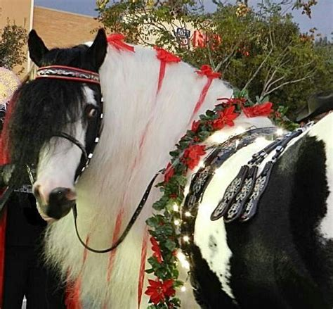 christmas decorating with horses 40 best horses images on horses horses and animals