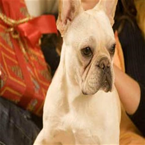 how to get rid of tear stains on dogs how to get rid of a dogs tear stains how to get rid of stuff