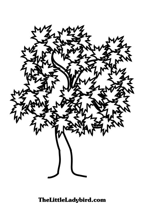 Tree Coloring Pages Thelittleladybird Com Maple Tree Coloring Page