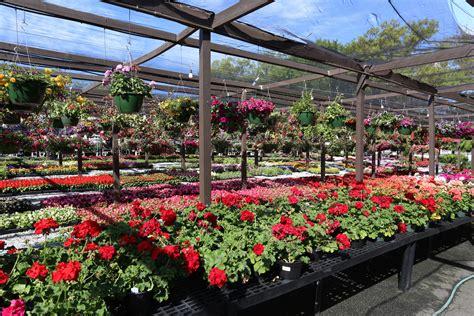 Garden Center Plants Plant Care Center Country Boy S Home Garden Center