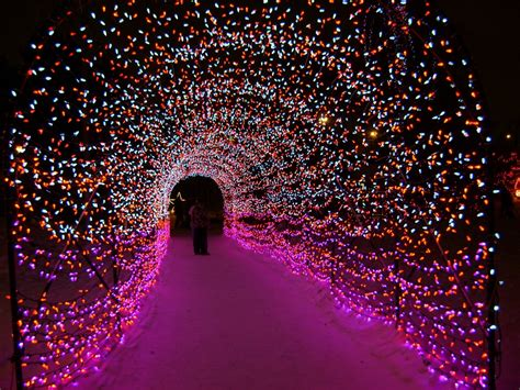 things to do with christmas lights top 5 things to do this in calgary lipstick lifestyle