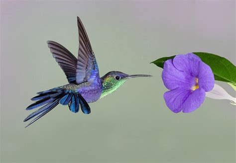 pictures of hummingbirds my image is halo the