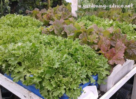 Growing Vegetables In Containers   Vegetable Container