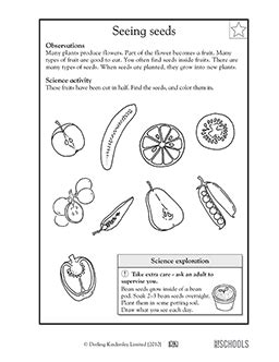 1st grade science Worksheets, word lists and activities