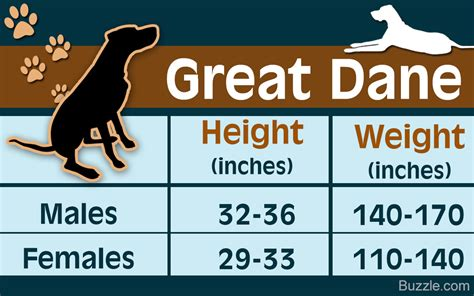 great dane puppy growth chart great dane growth chart depicting the developmental stages of this