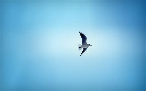 flying high living free chronicle of a sky diver books beautiful flying birds wallpapers