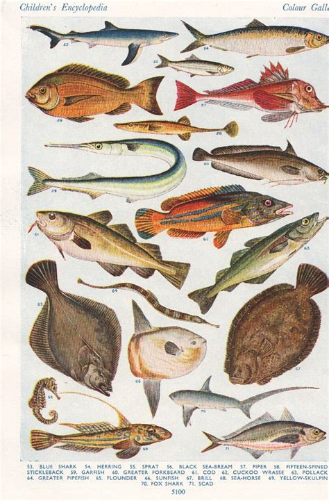 printable fish poster pin by sylvia van soest on vintage natural history