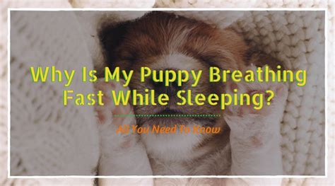 breathing fast when sleeping why is my puppy breathing fast while sleeping all you need to hi5dog