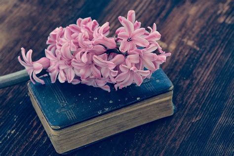 flower books free photo hyacinth book flower flowers free image