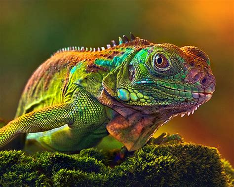 do lizards change colors lizards that change colors 7 animals that are better
