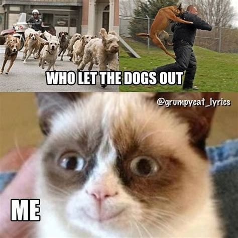 Who Let The Dogs Out Meme - who let the dogs out grumpy cat quotes pinterest