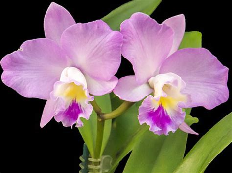 tips to take care of orchid plants boldsky com