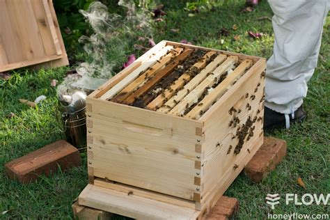 beginner beekeeping with a flow hive flow hive