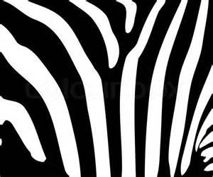 zebra stripe vector pattern zebra stripe pattern stock vector colourbox