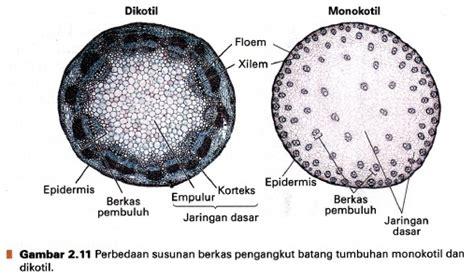 perbedaan bagian bagian tumbuhan monokotil  dikotil