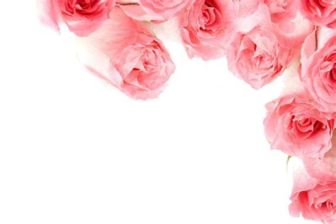 red rose love wallpapers wallpaper cave pink rose backgrounds wallpaper cave