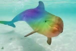colorful dolphins healing with the rainbow rays dolphin healing