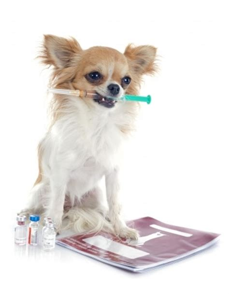 vaccines for dogs vaccines diseases