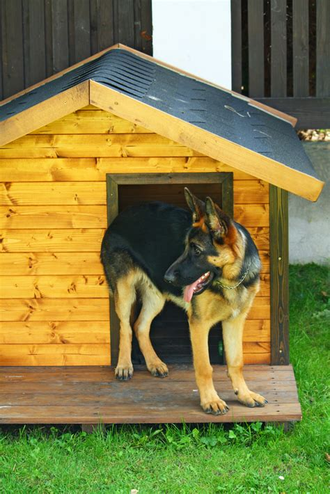 dog house training methods how to house train an adult dog the umbilical cord method