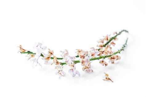 wann werden die krawatten abgeschnitten orchideen rispen 187 wann k 246 nnen sie abgeschnitten werden