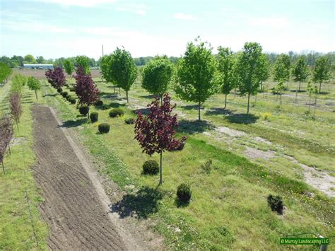 Landscape Kalamazoo Landscape Design Kalamazoo Mi 28 Images Landscaping