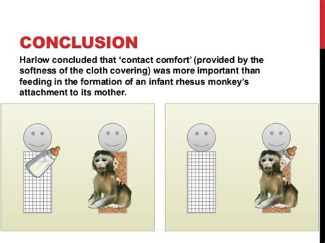 contact comfort psychology psychology harlow s experiments on attachment in monkeys