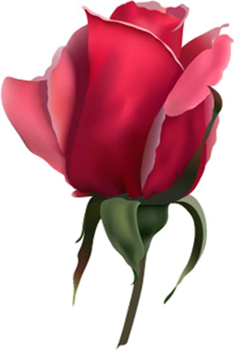 red rose bud this red rose bud artwork is a vector image