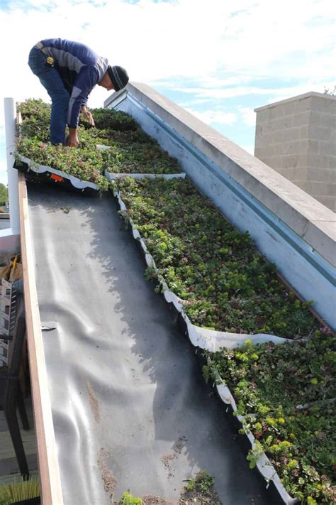 living green roof advantages planted roof advantages living roofs 5 17 best