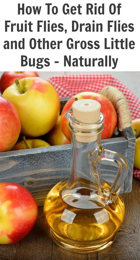 how do you get rid of flies in the backyard natural insect repellent for fruit flies drain flies and