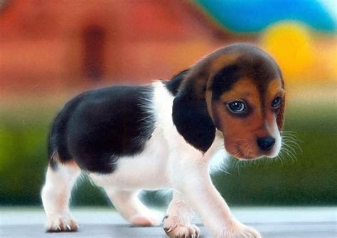 puppies puppies hound puppies www pixshark images galleries with a bite