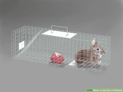 how do i get rid of rabbits in my backyard 3 ways to get rid of rabbits wikihow