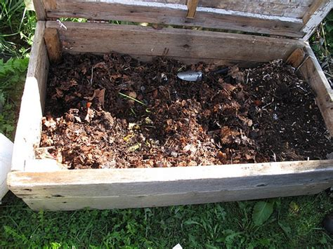 creare lada worm composting compact composting worms in a box
