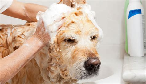 dish soap for dogs shoo recipe dish detergent and vinegar notebook
